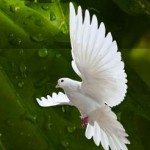 Dar la paz
