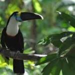 Iglesia católica coordina acciones conjuntas a favor de la Pan Amazonía