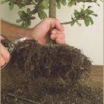 Cortar el árbol de raíz