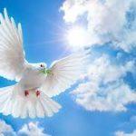 Paz para 2017