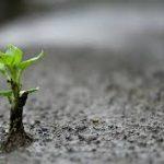 La palabra, semilla que da fruto