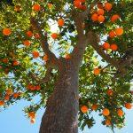 El árbol y sus frutos