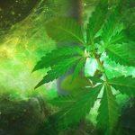 Legalizar la marihuana no es remedio mágico contra la violencia